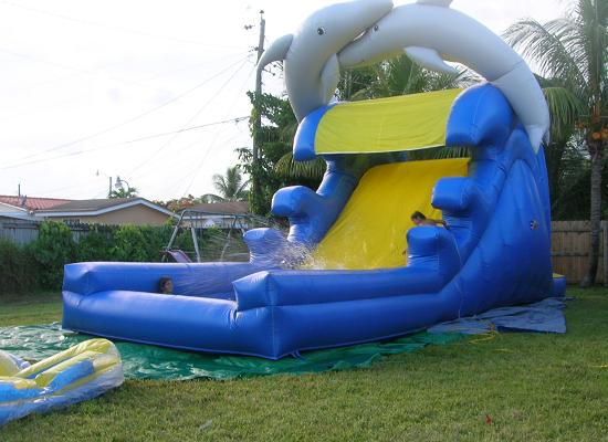Dolphins  Water Slide
